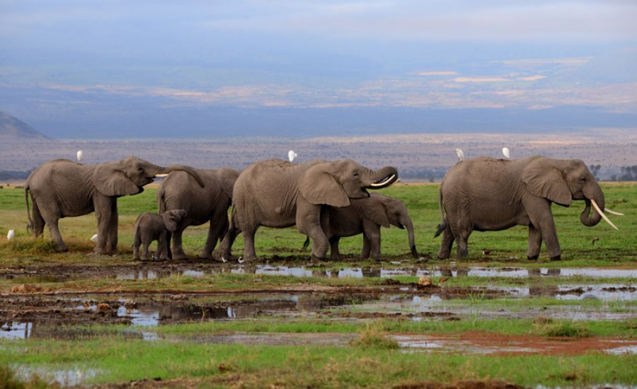 Kenya Safari Tour Packages -Amboseli safari