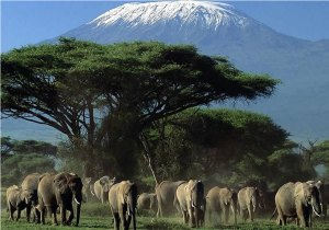 2-Day Amboseli Overnight Safari