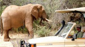 2-Days Nairobi Samburu flight Safari package