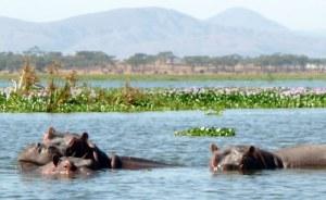 One day Lake Naivasha Safari