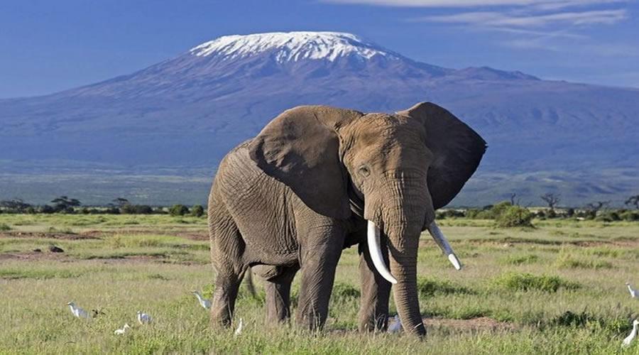 one day Nairobi safaris kenya