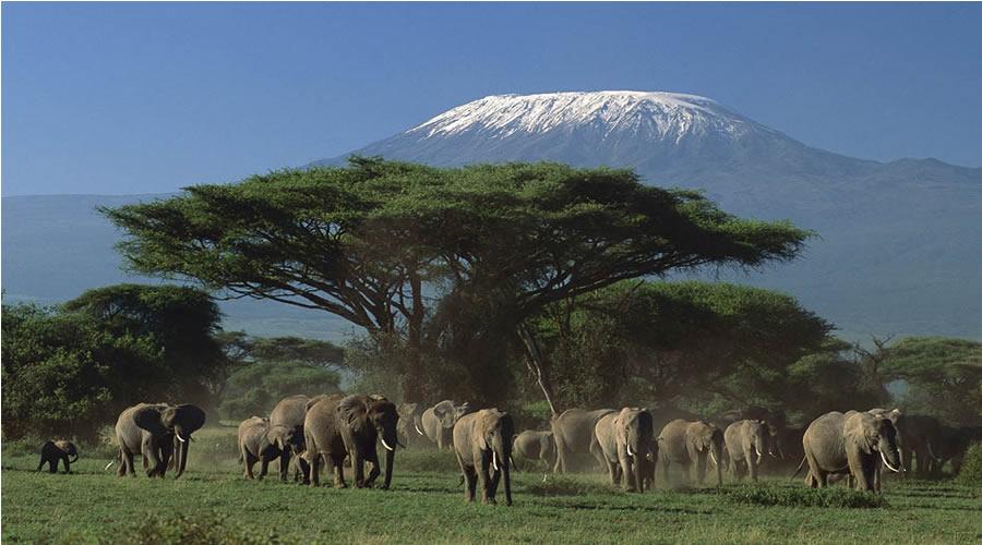 kenya safari vacation packages - Kenya holiday tour Packages