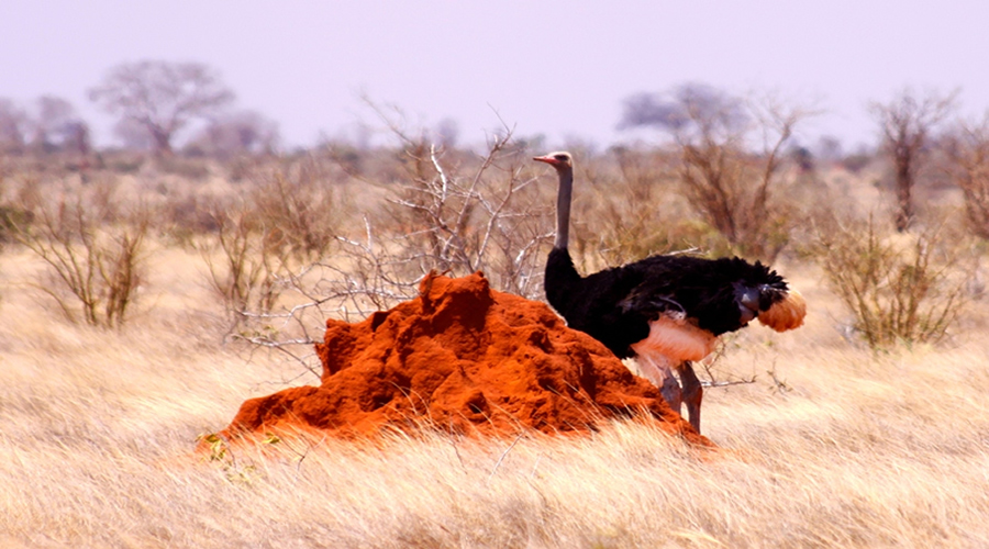 Kenya holiday tour Packages