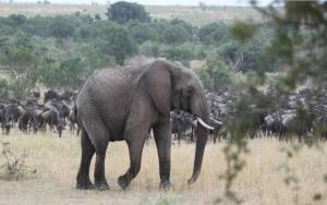 Masai Mara 4-Days Safari