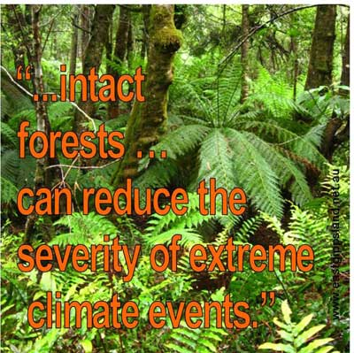 intact forests meme