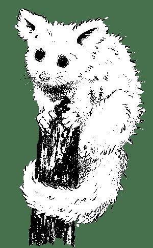 possum on stump drawing