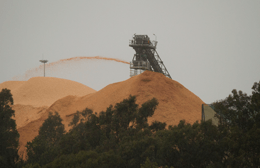 Figure 1. The 7 storey high mountain of woodchips at Nippon's export woodchip mill, Eden NSW