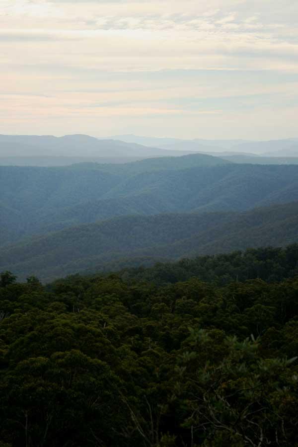 East Gippsland forests