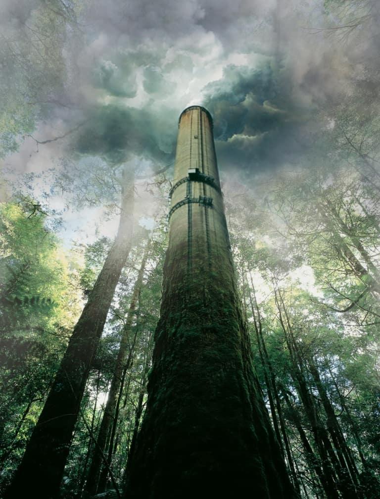 Forest biomass =      BIO-MASSACRE
