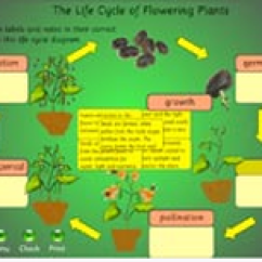 Sunflower Plant Life Cycle Diagram Universal Power Window Wiring Science East Grade 4 Picture Crickweb Cycles Activities