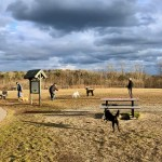 Town Cracks Down on Dogs Off Leash at Scalloptown