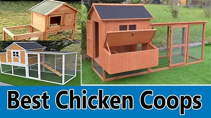 10 Best Chicken Coops 2020 Top Pick S By An Expert East Man Egg