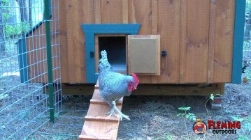 Best Automatic Chicken Door