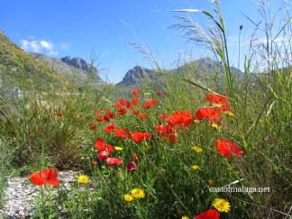 Wildflowers near the Zafarraya Pass