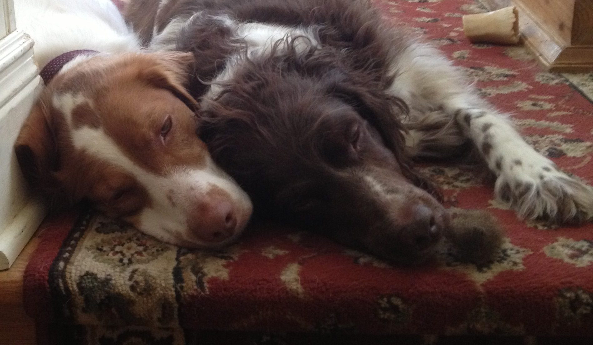 Bella and Gioa, the Minasi family girls