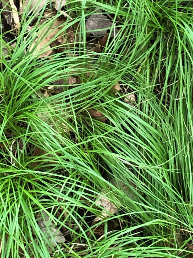 Amazing Grass — Cleo Sonneborn Photo