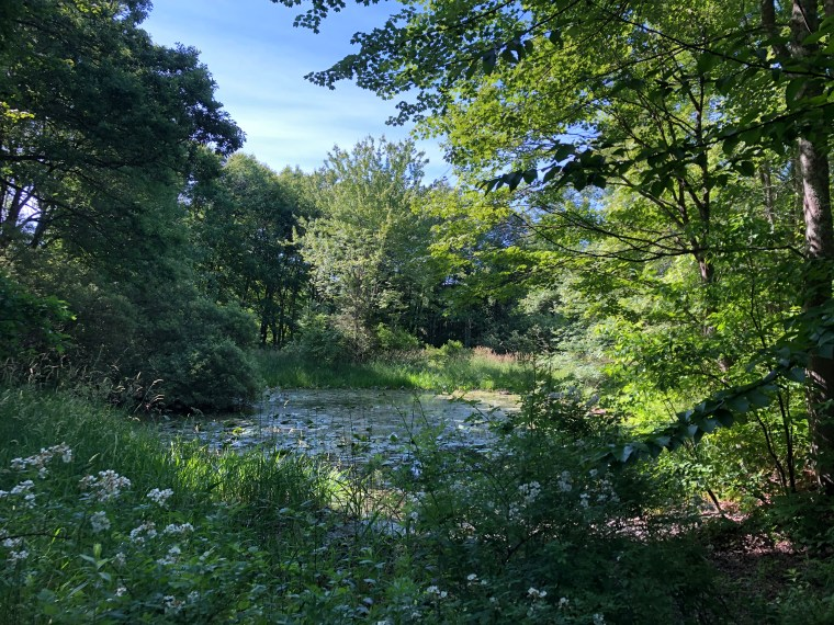 Pond and trees — Cleo Sonneborn Photo