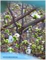 Budding Spring
