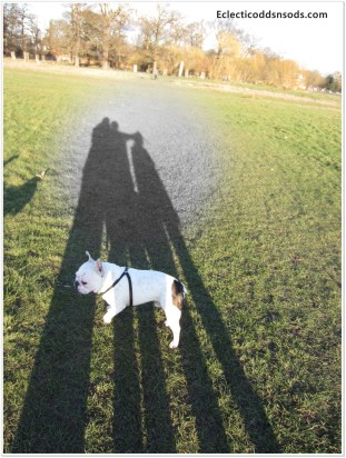 Family shadow trampled by Teddy