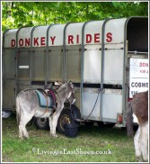 Donkey rides for children