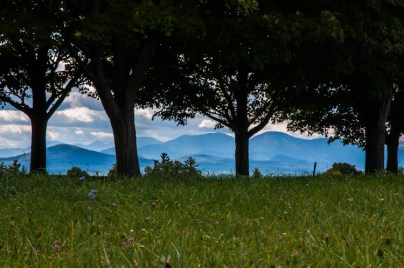 The Adirondacks peek out from under a row of maple trees at Shelburne Farm this past weekend.
