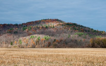 White pines, oaks, and a scattering of aspens lend lingering color to the hillside beyond the Farr Farm cornfield in Richmond yesterday morning.