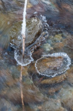 Ice forming atop rocks, snow on a stick in Fargo Brook yesterday morning.