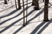 Trees cast strong mid-day shadows across the snow.