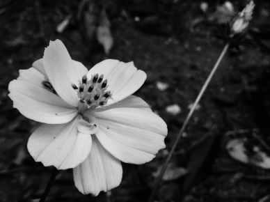 White Flower - East Texas Homestead