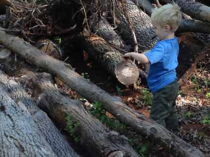 Buddy, our oldest son, is climbing on some trees that we have cut and set aside for timber.