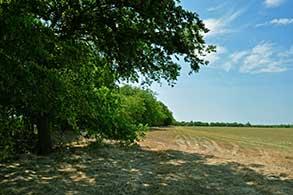 163-lamar-county-near-paris-texas-small-1