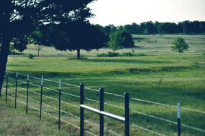 70_3-acres-hilltop-meadow-lamar-county-paris-2