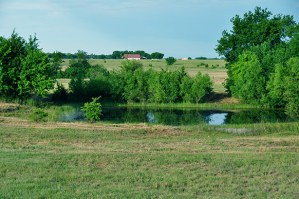70_3-acres-hilltop-meadow-lamar-county-paris-8