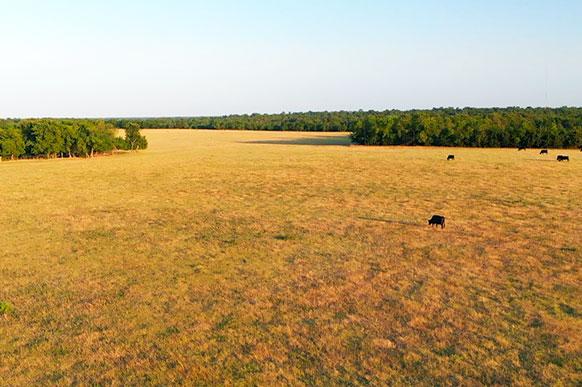 Delta240-aerialView-Cattle