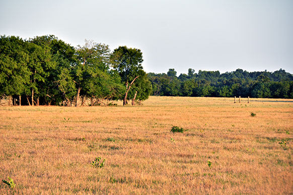 Delta240-meadow