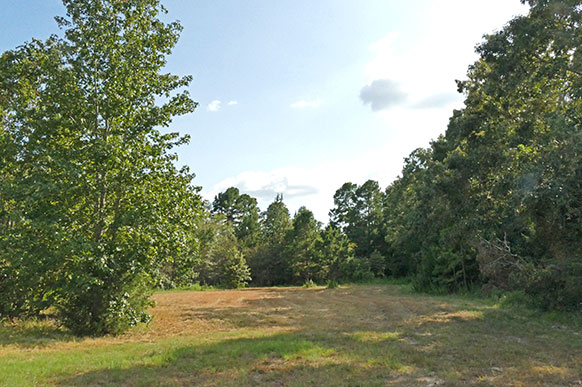 32 acres of pasture and woods for sale near Winnsboro TX