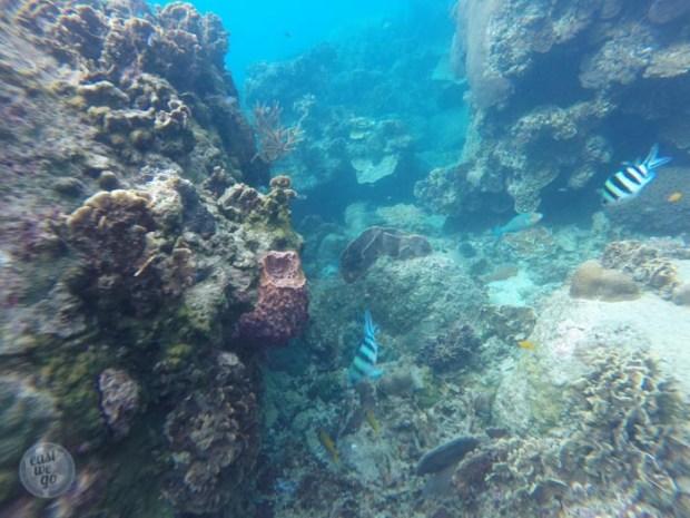Mango bay sea bottom
