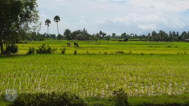 Kampot and Kep - Cambodia-53
