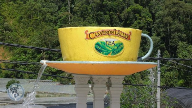 Cameron Highlands-19