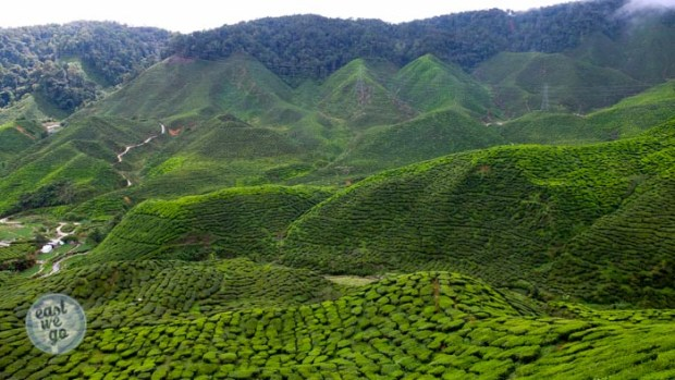 Cameron Highlands-20