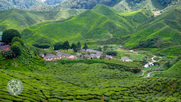 Cameron Highlands-23