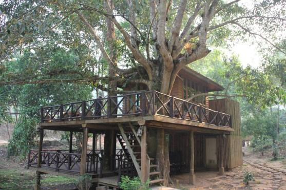 Dreamcaught - Tree House