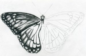 easy drawings butterfly drawing sketches draw butterflies pretty sketch cool simple flower things wings beginners pencil realistic flowers step fly