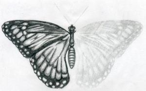 butterfly drawing easy drawings draw wings pencil butterflies sketch sketches realistic simple clipart copy trace animals pages loudest minds quiet
