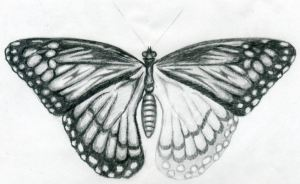 butterfly drawings half drawn easy shade sketches wings wing drawing shaded pencil pattern fore upper started left