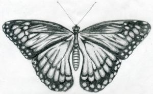 butterfly drawings easy drawing side draw sketches paper simple pattern wing coloring pages drawn animals half left graphite printable