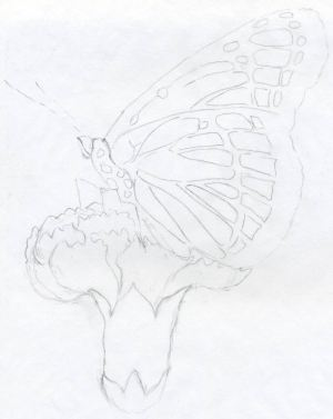 pencil easy drawings butterfly sketches drawing draw chola step beginners butterflies flower angle natural practice carnation totally taken say different