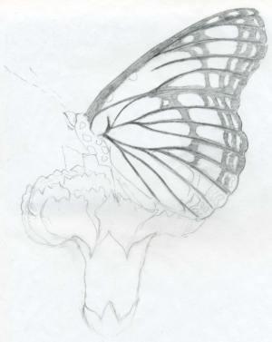 pencil easy drawing drawings butterfly sketches sketch butterflies nature step beginners beginner sketching flower simple flowers chainimage easiest very drawingartpedia