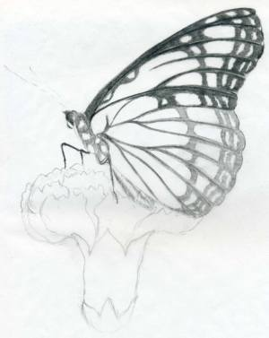 butterfly drawings pencil easy simple sketches sketch drawing copy rose thumbnail nature bottom beginners advice finished last practice