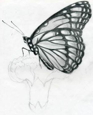 pencil butterfly drawings easy sketches drawing wings practice